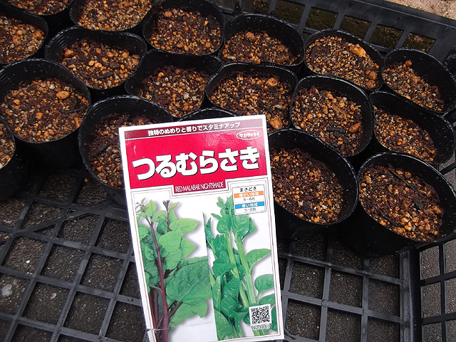 つるむらさき種蒔き4月30日