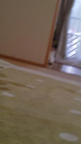 5_20120830140440.jpg