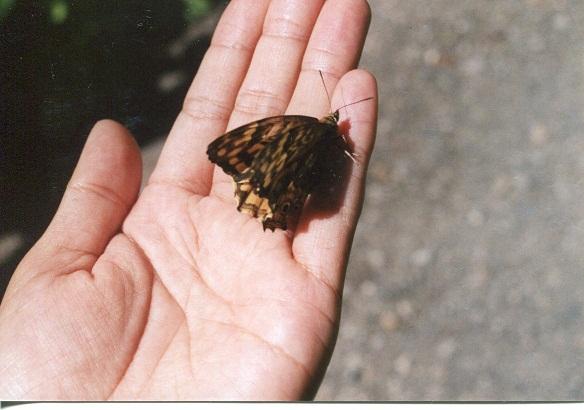 バケの沢大滝 蝶