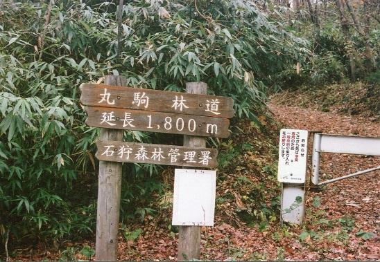 支笏湖トマリ (1)
