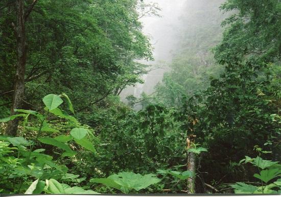 クテクン滝 (3)