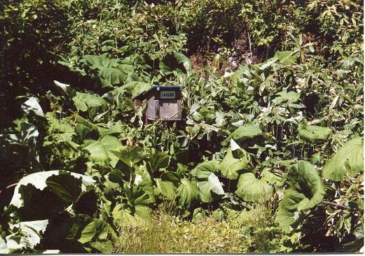 クテクン滝 (7)