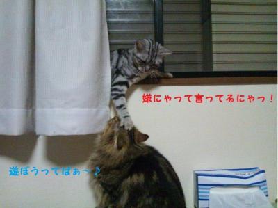 DSC_1306_convert_20120613103237.jpg