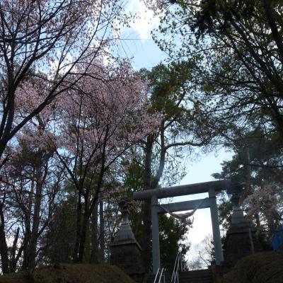 2012.5.7お花見4