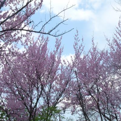 2012.5.7お花見3