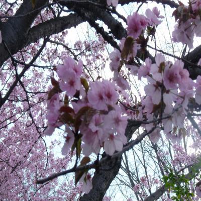 2012.5.7お花見2