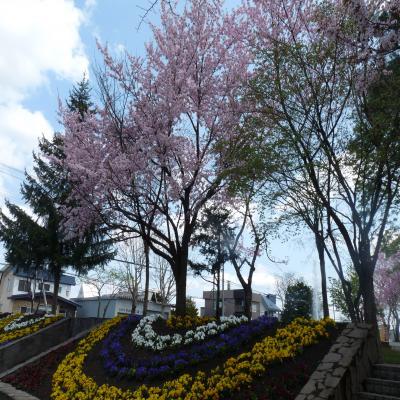 2012.5.7お花見1