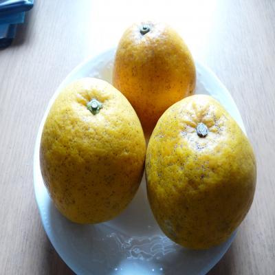 2012.5.15グレープフルーツ2