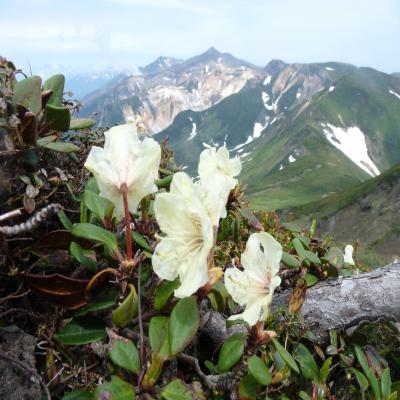 2012.6.17富良野岳17