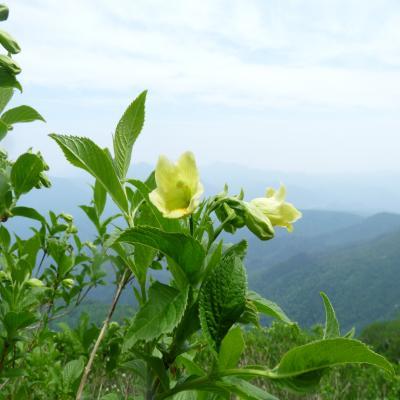 2012.7.2黒岳3