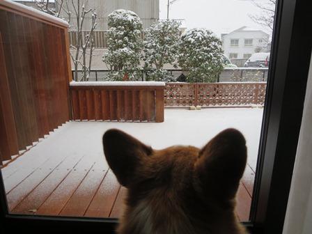 0208雪なんだ