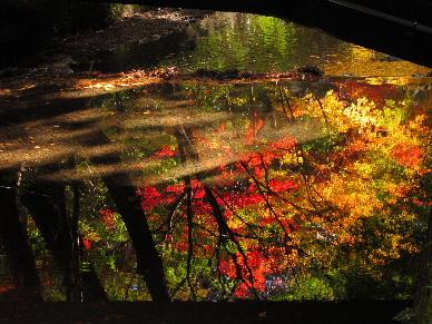 2012_1125紅葉の森へ0270