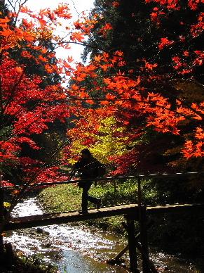2012_1125紅葉の森へ0169