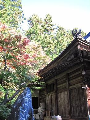 2012_1125紅葉の森へ0292