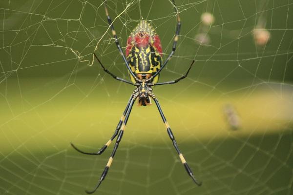 女郎蜘蛛11-18