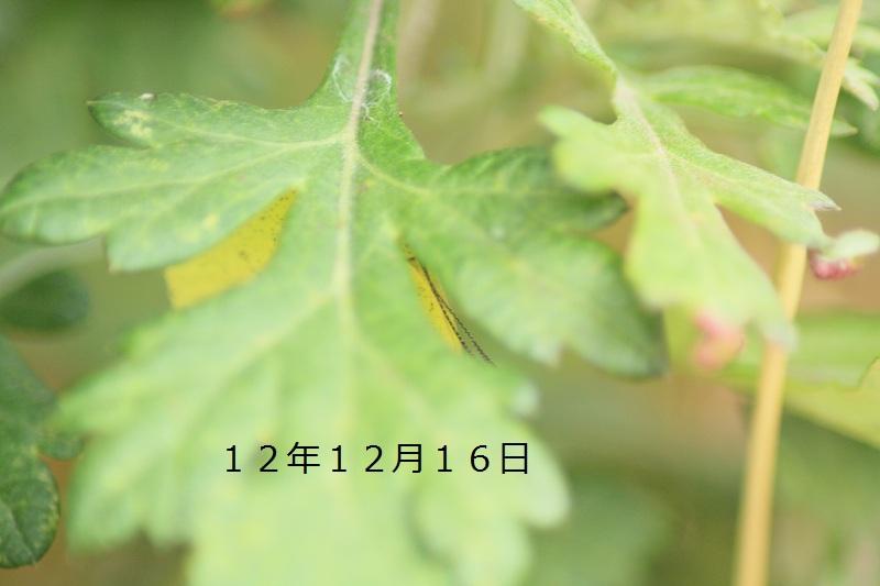 12-16キチョウ