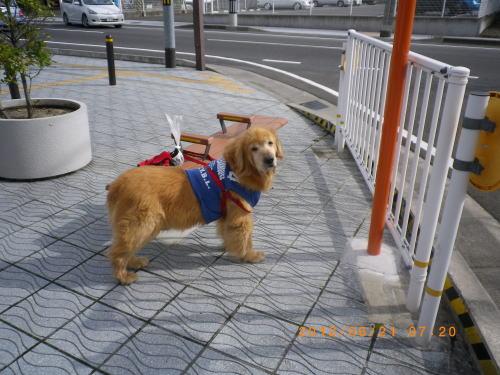 2012.6.朝のお散歩⑧