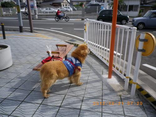 2012.6.朝のお散歩⑦
