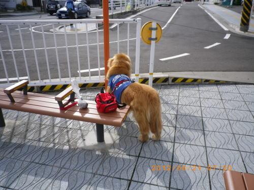 2012.6.朝のお散歩⑥