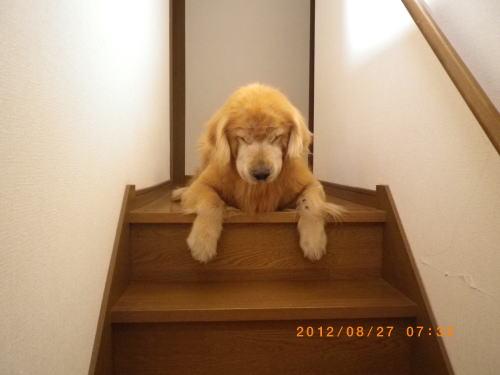 2012.8 ラヴィン2階へ 017