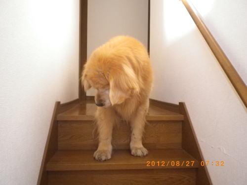 2012.8 ラヴィン2階へ 016