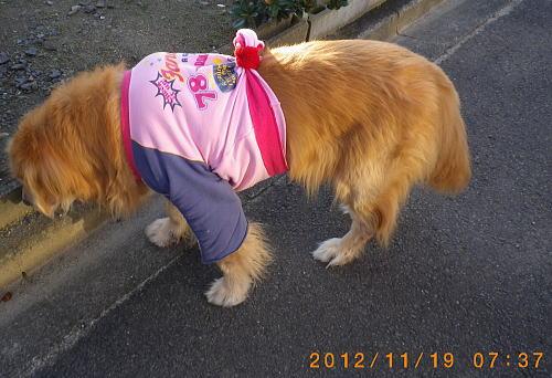 2012.11.19 朝のラヴィン