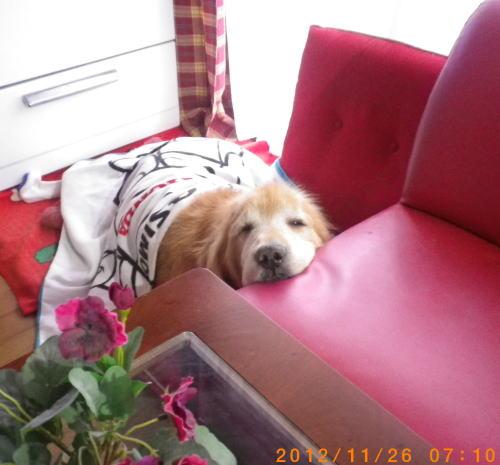 2012.11.26 アゴのせラヴィン