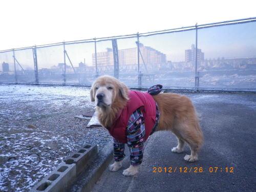 2012年12月26日 凍結路面でこけた日