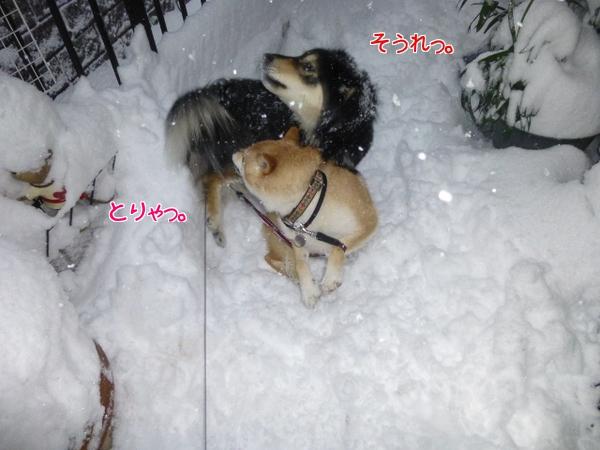 雪が深くて脚をとられます。