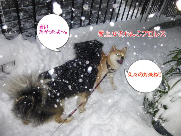 雪上、わんこプロレス