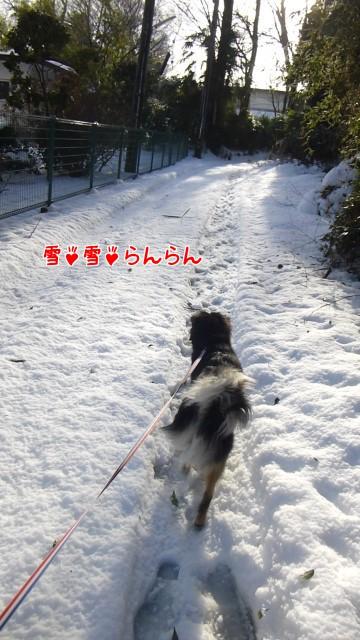 雪雪らんらん
