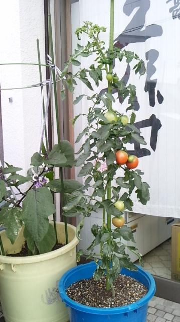 トマト&なすび