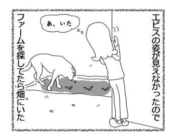 羊の国のラブラドール絵日記シニア!!「こら!そこのファーム・ドッグ!」1