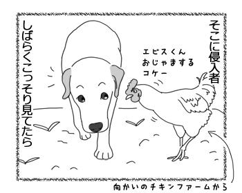 羊の国のラブラドール絵日記シニア!!「こら!そこのファーム・ドッグ!」2