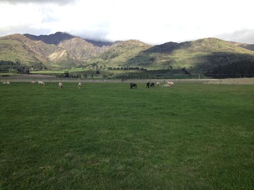 羊の国のラブラドール絵日記シニア!!「タンポポの季節」3