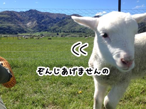 羊の国のラブラドール絵日記シニア!!「日曜サービス」6