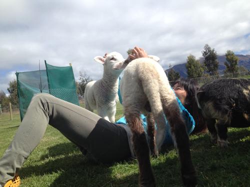 羊の国のラブラドール絵日記シニア!!「日曜サービス」7