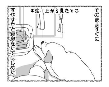 羊の国のラブラドール絵日記シニア!!「勝手にチャレンジ」2