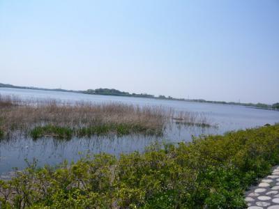 館林美術館と多々良沼8
