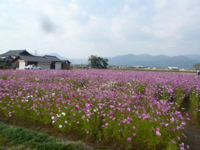 博多駅~吉野ヶ里へ26