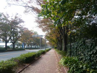 久留米観光(筑後川サイクリング)26