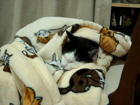猫柄毛布でぬくぬく