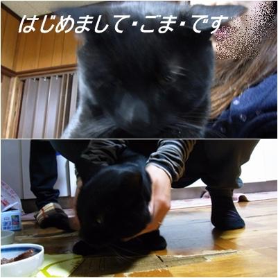 cats_20130105182110.jpg