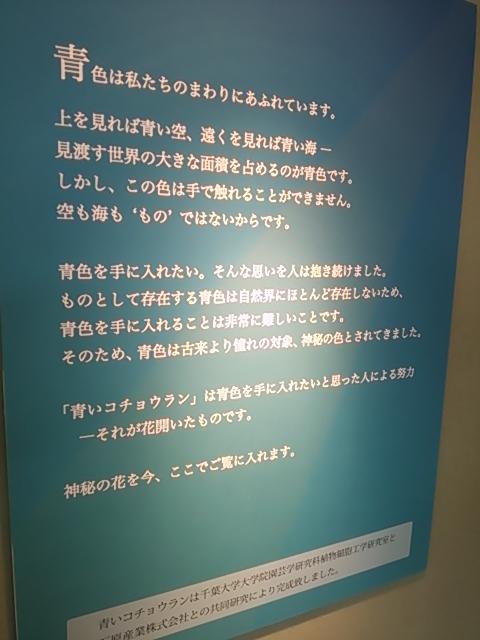 DSC_1467.jpg