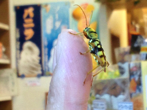 トラカミキリ虫2