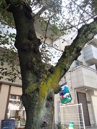 桜並木苔1