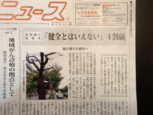 桜並木記事