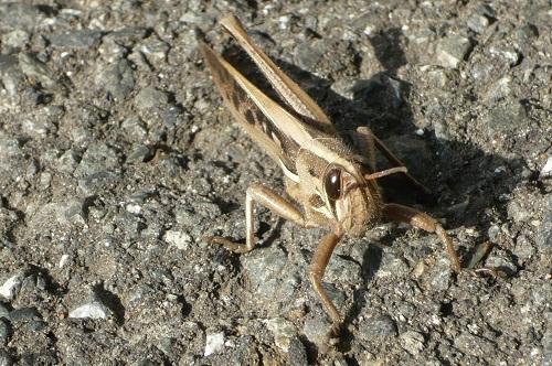 虫判定機 (2)