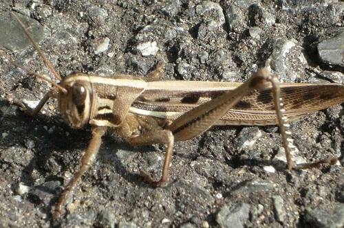 虫判定機 (3)