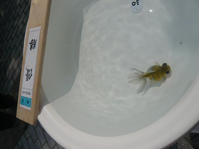 2009年品評会優勝魚